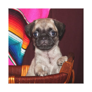 USA, California. Pug Puppy In A Wooden Basket Canvas Print