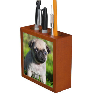 USA, California. Pug Puppy Looking At You Pencil/Pen Holder
