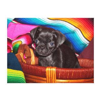USA, California. Pug Puppy Sitting In Basket Canvas Print
