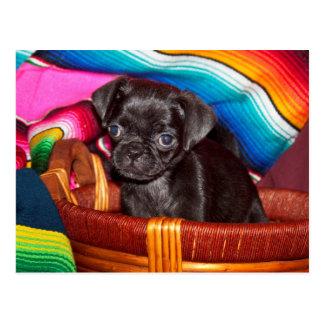 USA, California. Pug Puppy Sitting In Basket Postcard