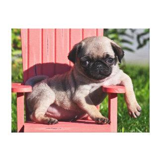 USA, California. Pug Puppy Slouching Canvas Print