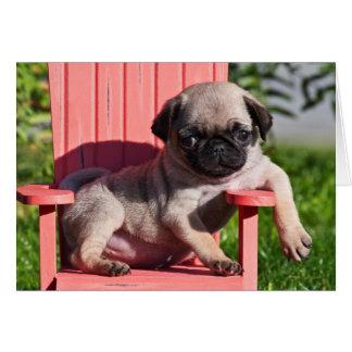 USA, California. Pug Puppy Slouching Card