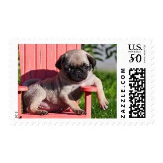 USA, California. Pug Puppy Slouching Postage