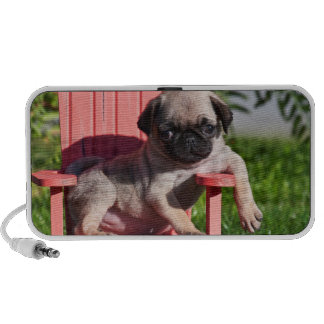 USA, California. Pug Puppy Slouching Speaker