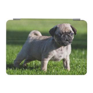 USA, California. Pug Puppy Standing In Grass 2 iPad Mini Cover