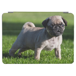 USA, California. Pug Puppy Standing In Grass 2 iPad Air Cover