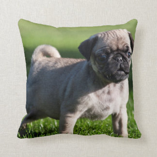 USA, California. Pug Puppy Standing In Grass 2 Throw Pillow