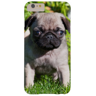 USA, California. Pug Puppy Standing In Grass Barely There iPhone 6 Plus Case