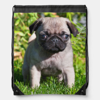 USA, California. Pug Puppy Standing In Grass Drawstring Bag