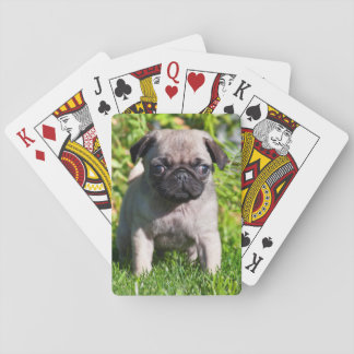 USA, California. Pug Puppy Standing In Grass Playing Cards