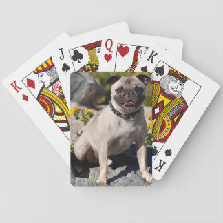 USA, California. Pug Sitting On Boulder Playing Cards