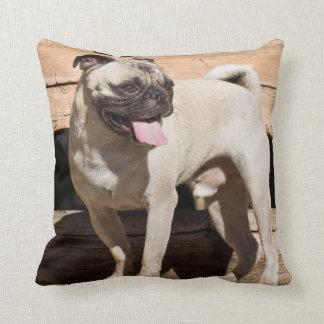 USA, California. Pug Standing On Wooden Bench Throw Pillow