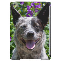 Case Savvy Glossy Finish iPad Air Case with Australian Cattle Dog Phone Cases design