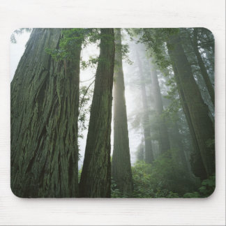 USA, California, Redwood National Park, 2 Mouse Pad