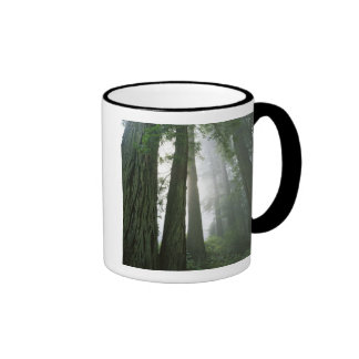 USA, California, Redwood National Park, 2 Ringer Mug
