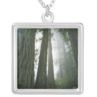 USA, California, Redwood National Park, 2 Silver Plated Necklace