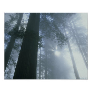 USA, California, Redwood National Park, Del Poster