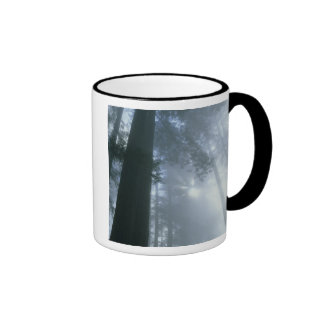 USA, California, Redwood National Park, Del Ringer Mug