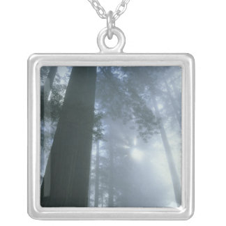 USA, California, Redwood National Park, Del Silver Plated Necklace