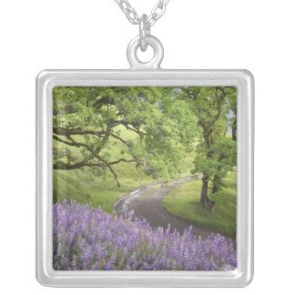 USA California Redwood National Park Dirt Necklaces