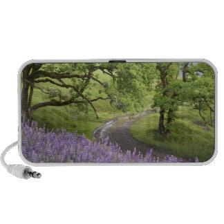 USA, California, Redwood National Park. Dirt Portable Speaker