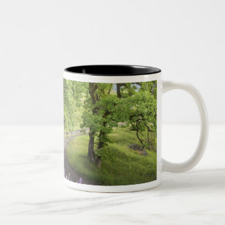 USA, California, Redwood National Park. Dirt Two-Tone Coffee Mug