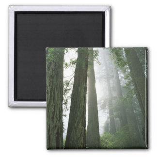 USA, California, Redwood National Park, Magnet