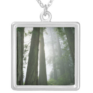 USA California Redwood National Park Necklace