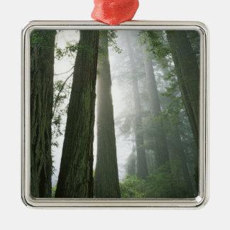 USA, California, Redwood National Park, Square Metal Christmas Ornament