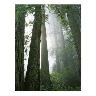USA, California, Redwood National Park, Post Cards
