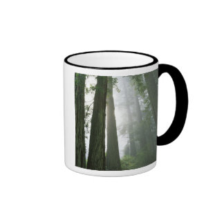USA, California, Redwood National Park, Ringer Mug