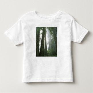 USA, California, Redwood National Park, Toddler T-shirt