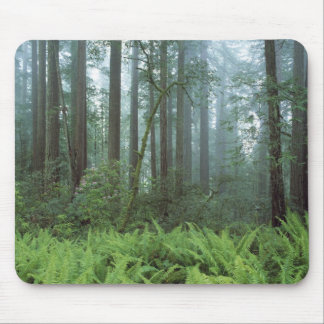 USA, California, Redwood NP. Ferns and Mouse Pad