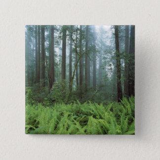 USA, California, Redwood NP. Ferns and Pinback Button
