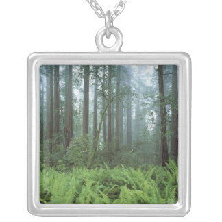 USA, California, Redwood NP. Ferns and Silver Plated Necklace