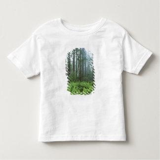 USA, California, Redwood NP. Ferns and Toddler T-shirt