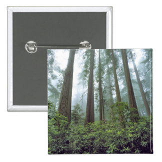 USA, California, Redwood NP. Fog filters the 2 Inch Square Button