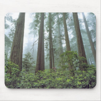 USA, California, Redwood NP. Fog filters the Mouse Pad