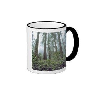 USA, California, Redwood NP. Fog filters the Ringer Coffee Mug