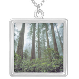 USA, California, Redwood NP. Fog filters the Silver Plated Necklace