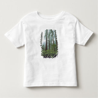 USA, California, Redwood NP. Fog filters the Toddler T-shirt
