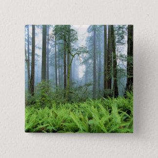 USA, California, Redwood NP. Redwood trees Pinback Button