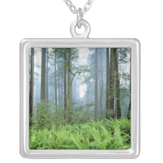 USA, California, Redwood NP. Redwood trees Silver Plated Necklace