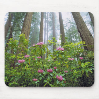 USA, California, Redwood NP. Rhododendron Mouse Pad