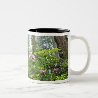 USA, California, Redwood NP. Rhododendron Two-Tone Coffee Mug