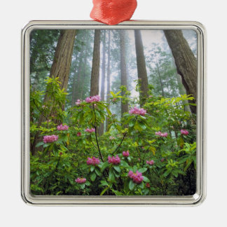 USA, California, Redwood NP. Rhododendron Ornament