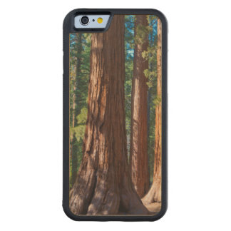 USA, California. Redwood Tree Trunks, Mariposa Carved Maple iPhone 6 Bumper Case
