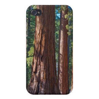 USA, California. Redwood Tree Trunks, Mariposa iPhone 4/4S Cover