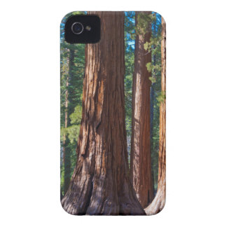 USA, California. Redwood Tree Trunks, Mariposa iPhone 4 Case-Mate Case