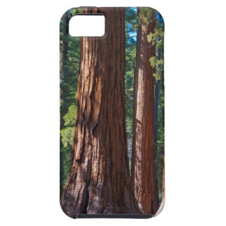 USA, California. Redwood Tree Trunks, Mariposa iPhone SE/5/5s Case